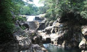 Waterfalls and forest in the Chimanimani Nature Reserve (Photo: J. Timberlake, RBG Kew)