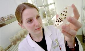 A seed scientist at the Millennium Seed Bank