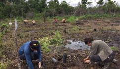 Image showing Kew PhD student Lucy Dablin and assistants plant trees