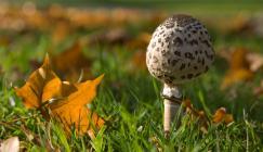 Fungi in autumn