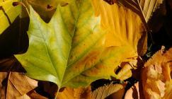Autumn leaves at Wakehurst (Image: Jim Holden)