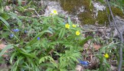 Azerbaijan flowers