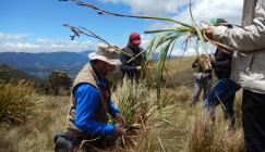 Image showing the group Collecting herbarium specimens in the Páramo