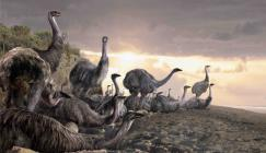 Image showing artist's impression of elephant birds on a beach in Madagascar