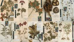 Photo collage of a selection of specimen sheets from Kew's herbarium collections.