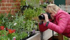Woman taking photograph of flowering plants