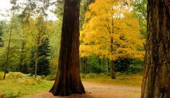 Autumn at Wakehurst (Image: Jim Holden)
