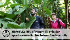 Participants on the CWR Malaysia training course search for crop wild relatives