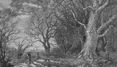 Sylvan Winter oak engraving