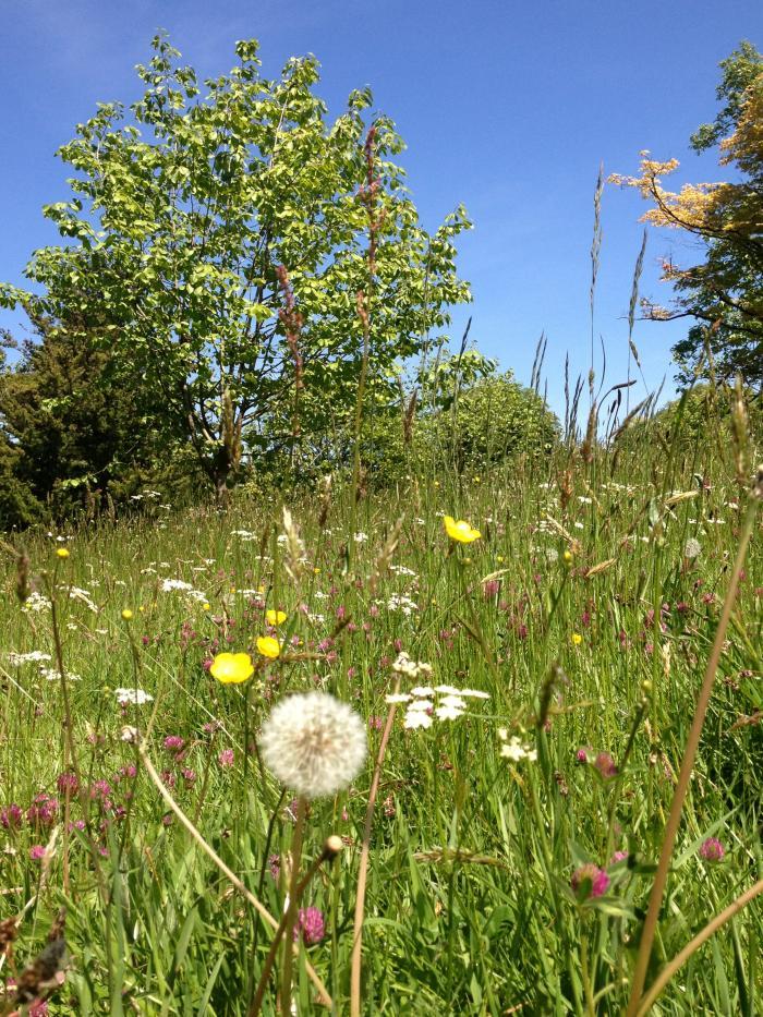 Photo of wildflowers at Wakehurst