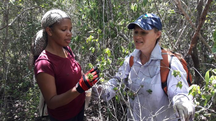 Image showing Tessa Smith (BVI Government) and Nancy Woodfield-Pascoe (NPTVI) surveying dry forest, a globally threatened biome