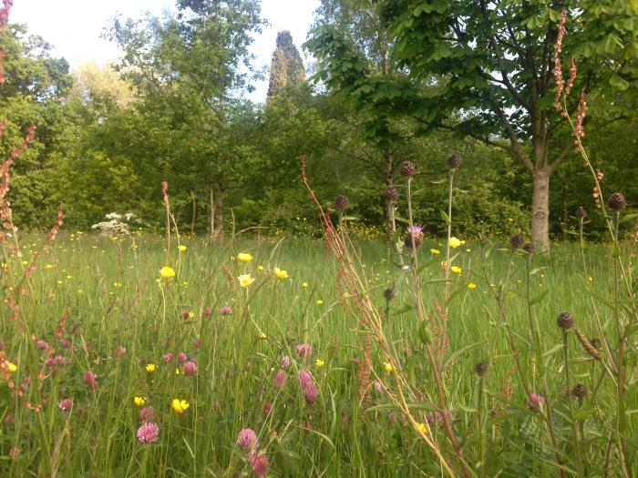 Photo of meadows at Wakehurst