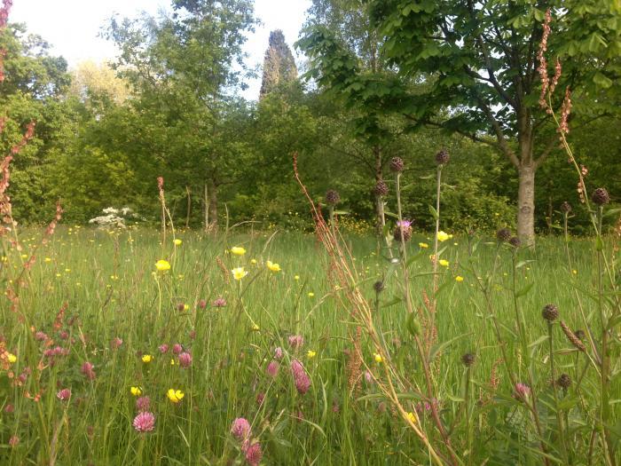 Photo of meadows at Wakehurst
