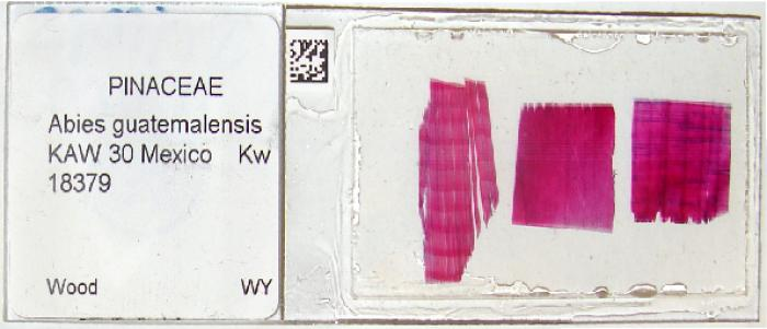 Barcodes will be attached to slides before scanning (Photo: A.Musson).