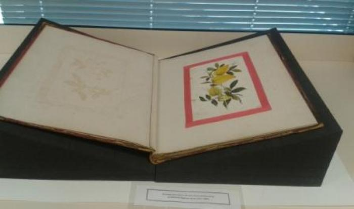 Photo of Ward album of pith paintings