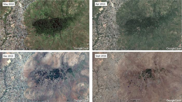 Image showing Comparison of four Google Earth Images 2010-2016 of one of the last remaining locations for Cola mossambicensis, showing forest loss of 97% in 5 years.