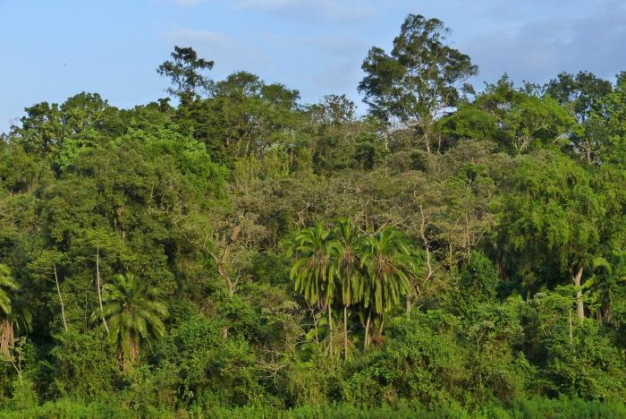 Coffee forest, south west Ethiopia (Image: J. Williams, RBG Kew)