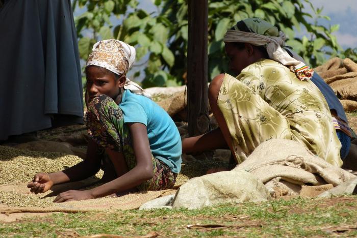 Hand-sorting dried and hulled coffee, Yayu (Image: J. Williams RBG Kew).