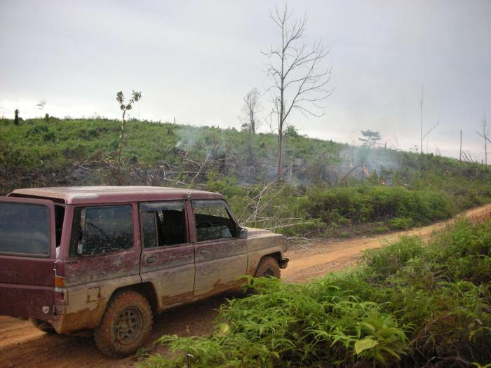 Lowland rainforest cleared felled and burnt for oil palm Jambi Province Sumatra Indonesi