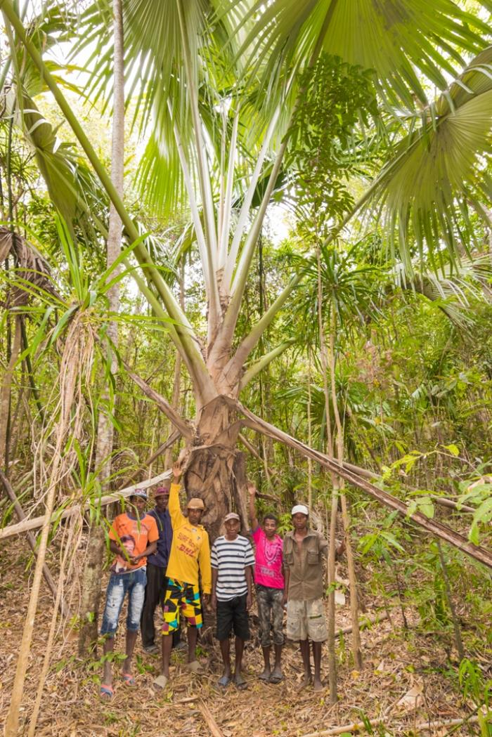 Image showing local villagers with Tahina spectabilis adult at new site, near Amparahibe
