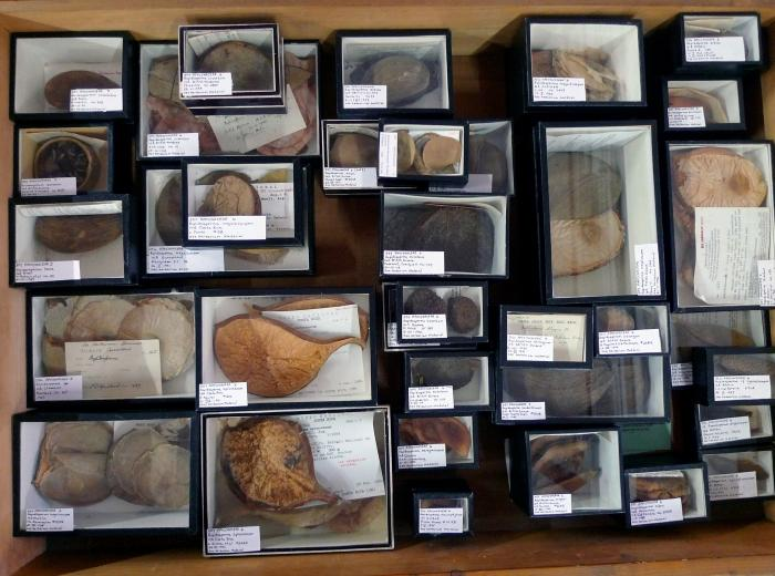 Image showing drawers in the Apocynaceae carpological collection