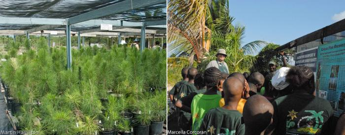 Photo of the Caicos pine ex-situ collection in TCI and a school group being shown around