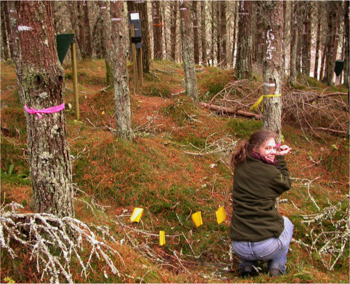 The picture shows Filipa crouching down in pine woodland and tying a pink ribbon marker onto a pine tree trunk