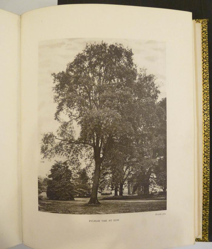 Photo of photogravure from Volume 5 Plate 319 'Trees of Great Britain and Ireland'