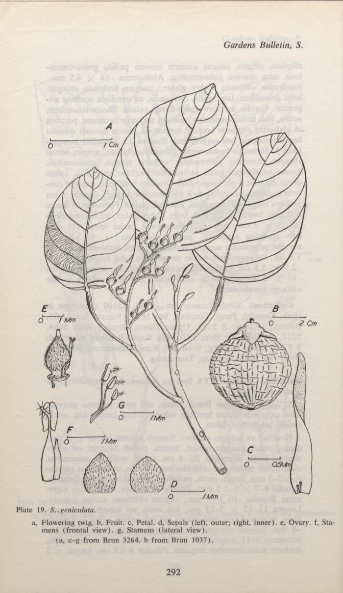 Gardens Bulletin - S.. Geniculata