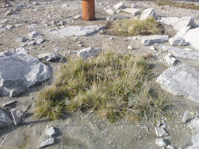 Trial of native seeds in re-covering bare clay soil in the Falkland Islands (Image: Frin Ross, Falklands Conservation)