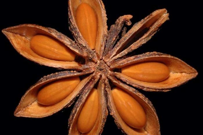 Image showing Star Anise, Illicium verum
