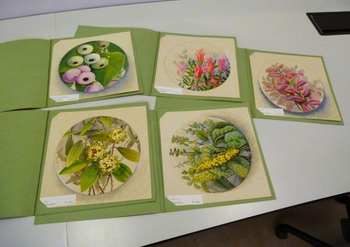 Photo of a selection of Ellis Rowan's paintings from Kew's collection