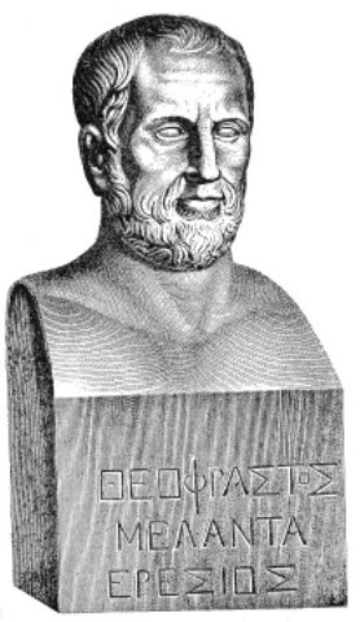 Photo of a picture of a bust of Theophrastus. The sculpture is from the Villa Albani in Rome.