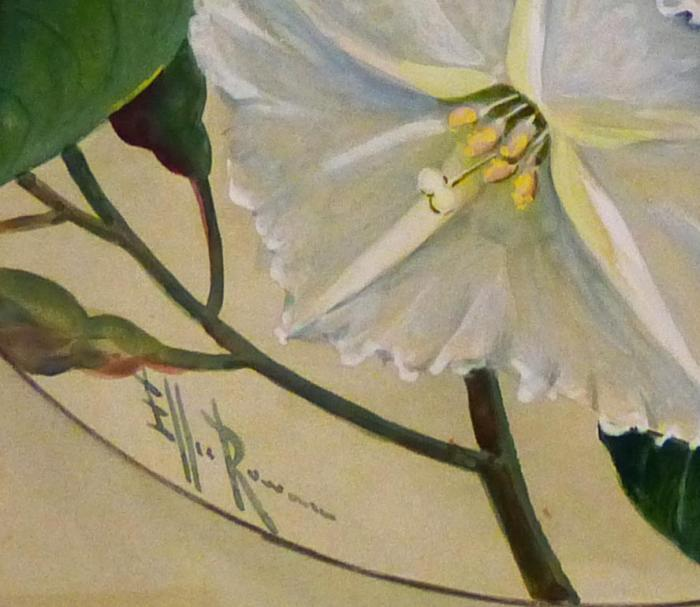 Photo of a section of Ipomoea by Ellis Rowan