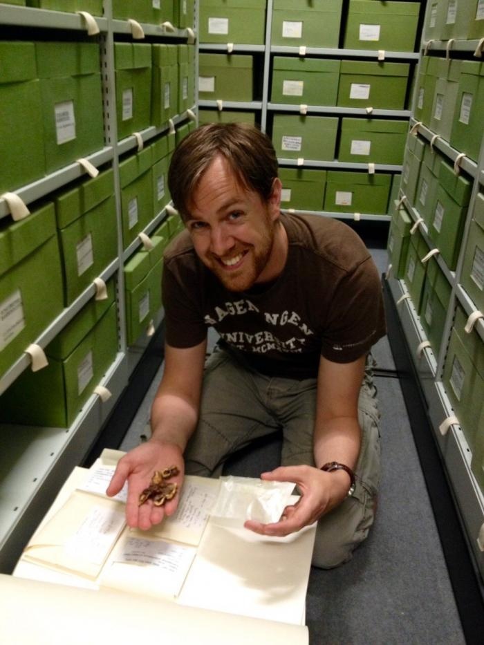 Image showing me in the fungarium looking at mushrooms collected from an Atta cephalotes lab colony. Normally this fungus does not produce mushrooms, which makes this specimen very special.