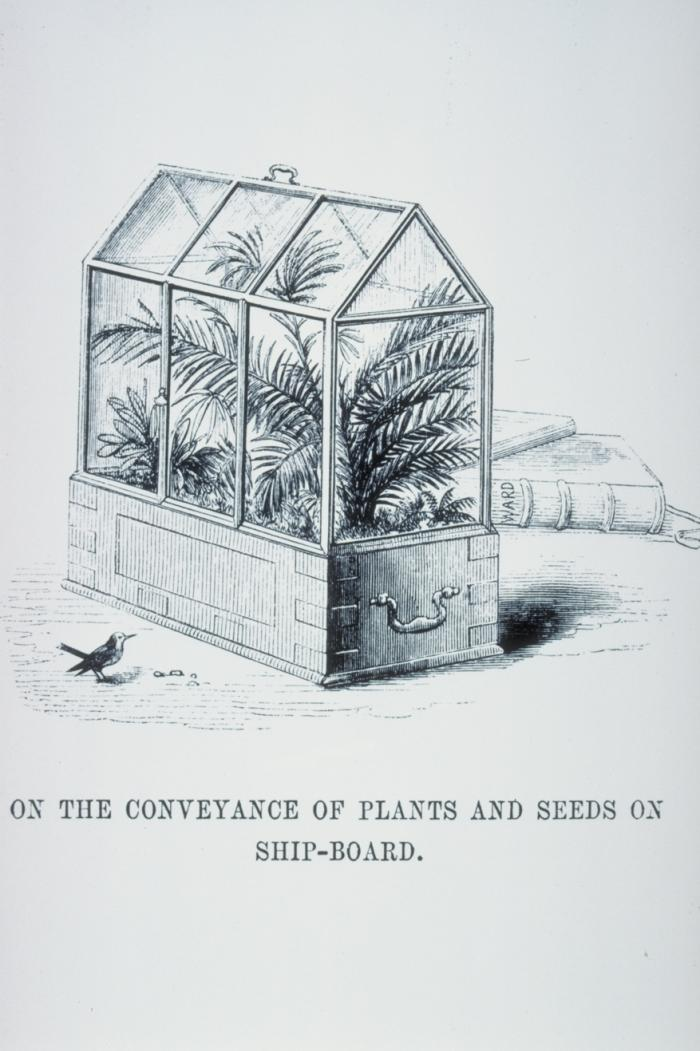 Drawing from the publication 'On the growth of plants in closely glazed cases' 1852