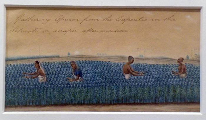 Opium cultivation, Company school painting c.1840 India