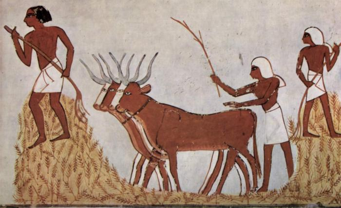 Image showing 'Early Plant and Animal Domesticates':  Wheat and Cattle in Ancient Egypt.