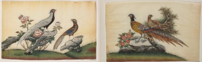 Photo of two examples of Pith paintings