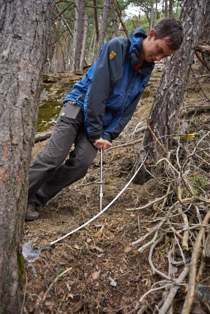 Picture shows Sieste dressed in waterproofs leaning over a large cork-screw-shaped soil corer in a pine woodland