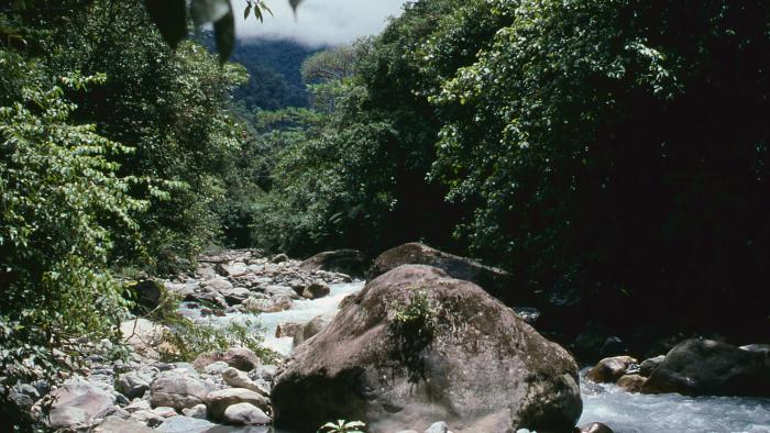 Image showing Kali Kopi river, lowland Indonesian New Guinea