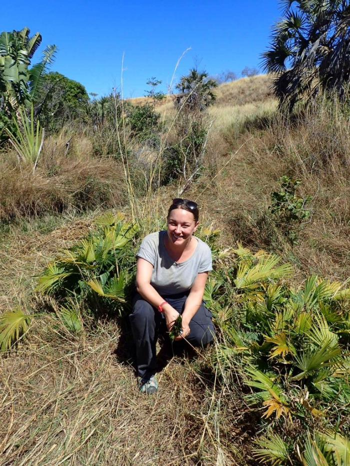 Image showing Lauren Gardiner with the population of Tahina spectabilis seedlings found a few kilometres away from the main population