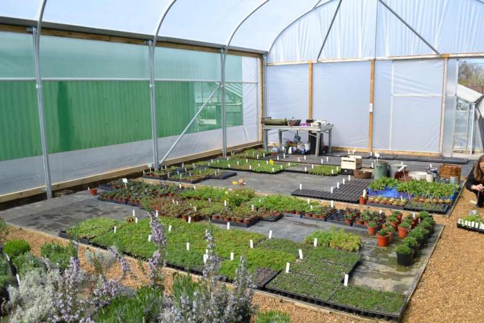 UK Native Seed Hub (UKNSH) plugs growing in the nursery