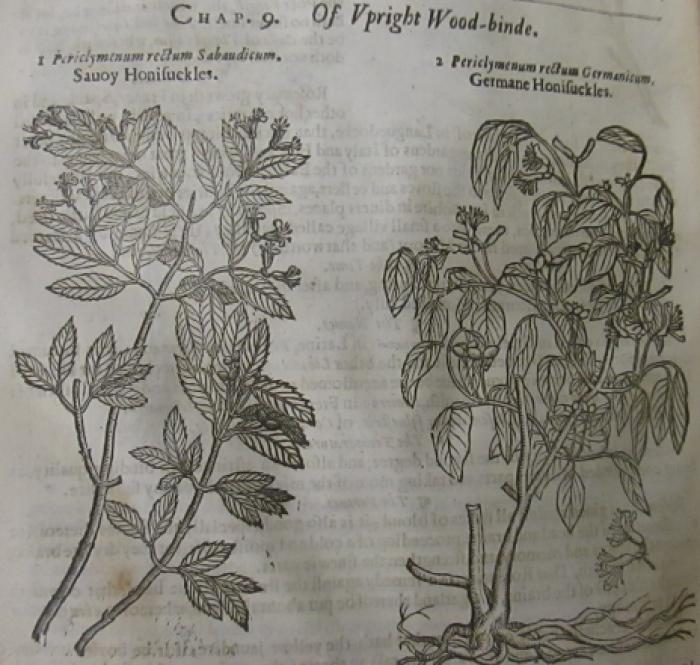Plants in Shakespeare   Kew