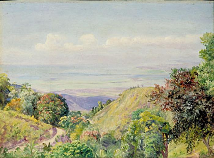 View over Kingston and Port Royal from Craighton, Jamaica: painting by Marianne North