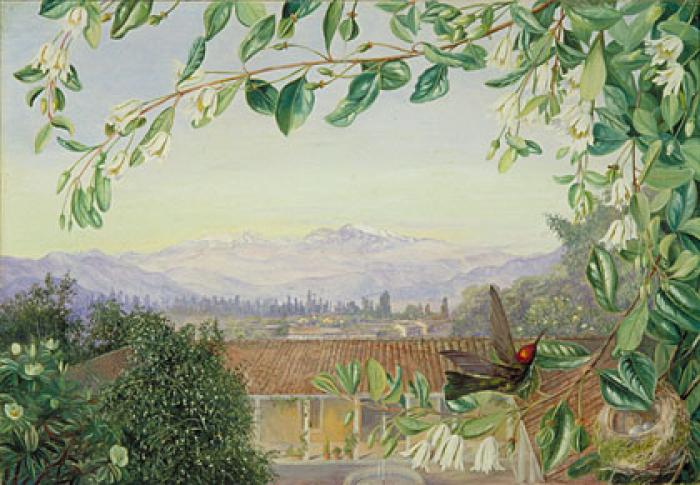 The Permanent Snows, from Santiago; Patagua in front with Hummingbird and Nest: painting by Marianne North