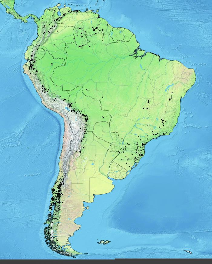 Map of the distribution of all conifer species in South America