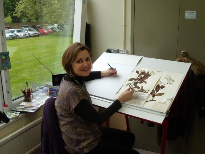 Botanical illustrator Lucy Smith at her desk