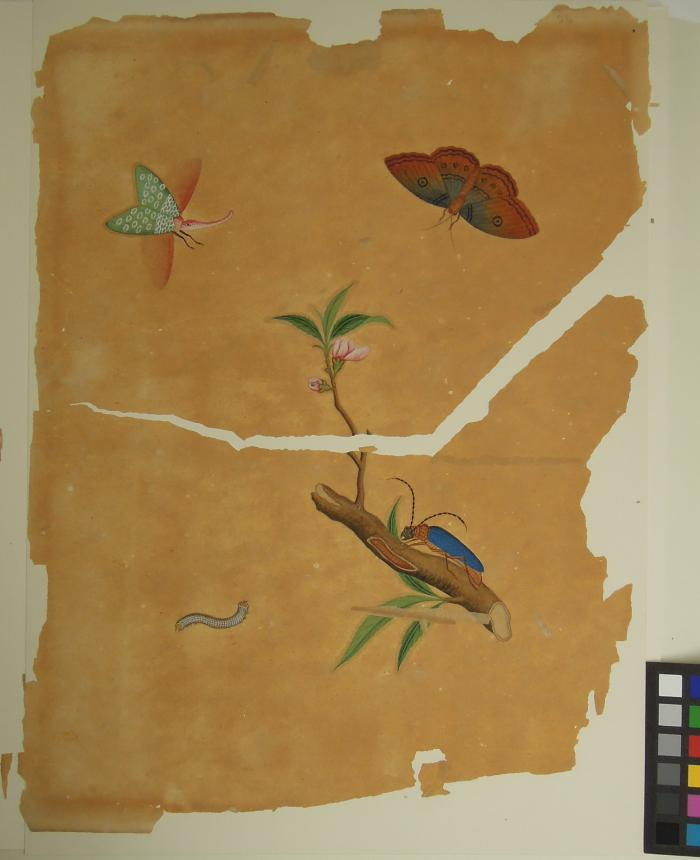 Chinese botanical watercolour before treatment