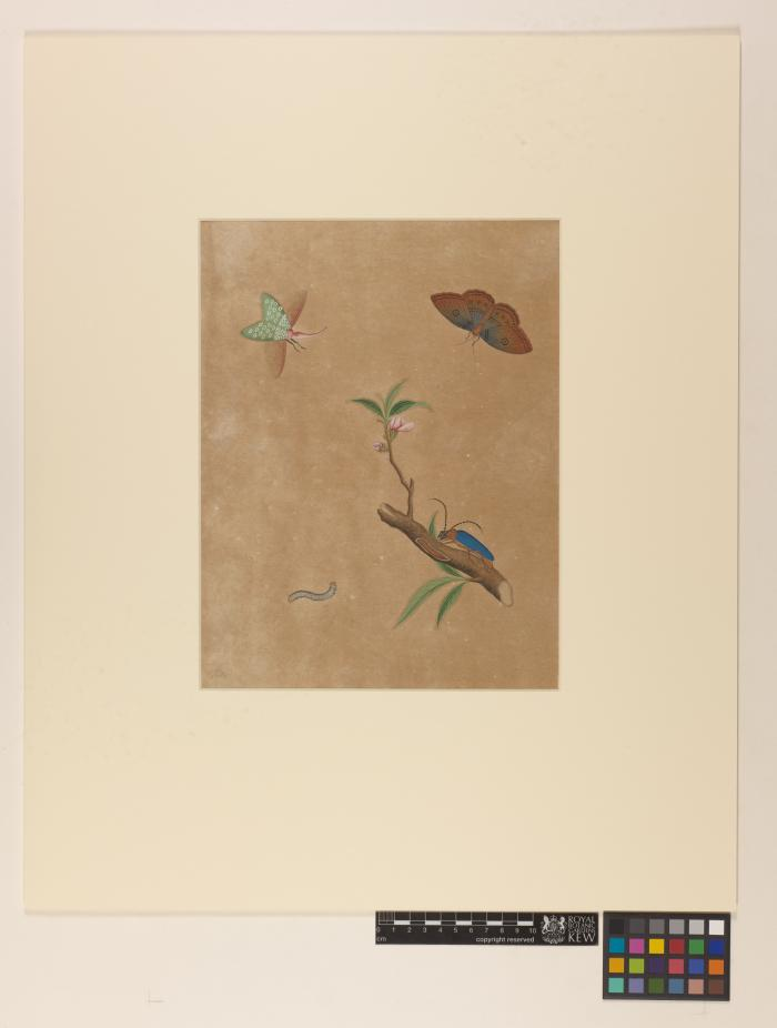 Chinese watercolour after treatment in mount